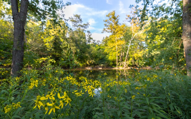 Flowers, trees, and a pond at Cove Forge Behavioral Health